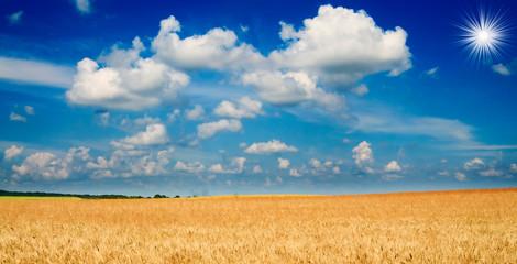 Amazing yellow field of wheat.