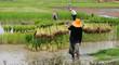 Rice Plantation in Thailand