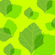 green leafs texture - seamless pattern. vector illustration