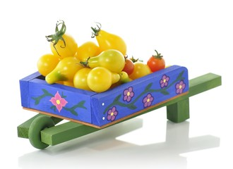 blue wheelbarrow full of tomatoes