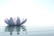 Leinwandbild Motiv Zen flower loto in water
