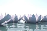 Zen loto flowers in water