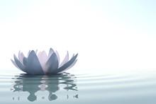 Zen fleur loto dans l'eau