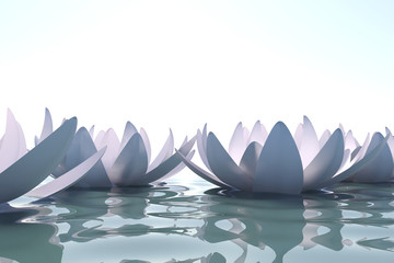 Zen loto flowers in water