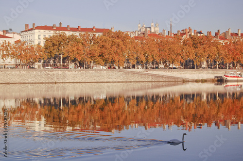 White swan on Rhone River with colorful autumn trees