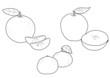 Frutta da colorare: mele mandaranci e mandarini