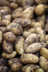 pommes de terre pour locavores