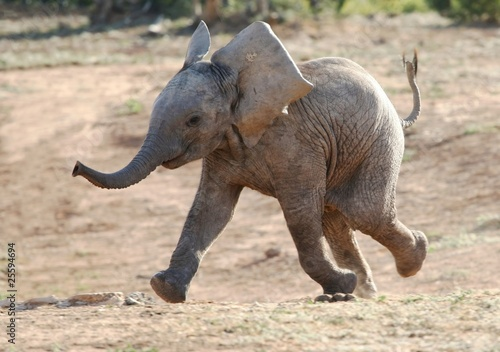 Canvas Afrika Baby Elephant Running