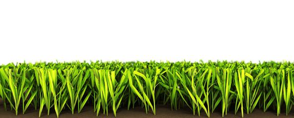 herbe