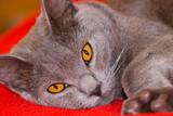regard de felin poster