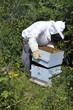 L'apiculteur retire ses hausses