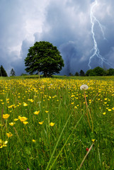 flowery meadow with twister and lightning