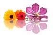 Clematisblüte, Ringelblumen und Blüte