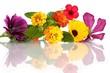 Blütenarrangement (Mitte: Wandelröschen / Lantana)
