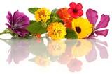 Fototapety Blütenarrangement (Mitte: Wandelröschen / Lantana)