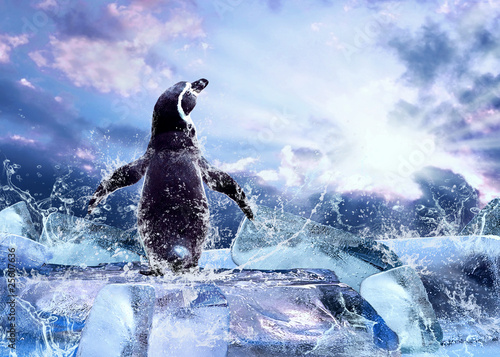In de dag Pinguin Penguin on the Ice in water drops.