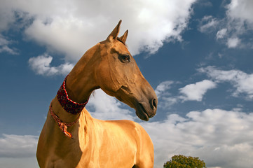 golden horse of turkmenistan