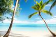 Caribbean sea and coconut palm