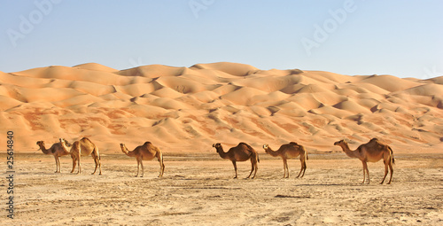 Fotobehang Dubai Empty Quarter Camels