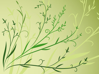 Plant leaf background