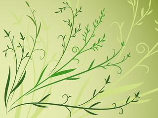 Plant leaf background