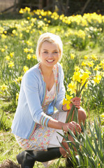 Young Woman Picking Spring Daffodils