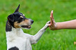 canvas print picture - Give me five - Dog pressing his paw against a woman hand
