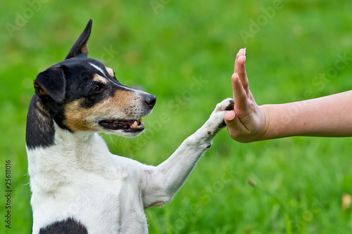 canvas print picture Give me five - Dog pressing his paw against a woman hand