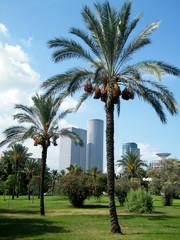 Tel Aviv Volovelski-Karni Garden Palms 2010
