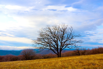 Alone tree in mountain