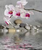 Fototapety Orchidee und Wasser