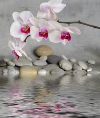 Orchidee und Wasser © Sunnydays