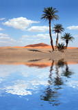 Palm Trees near the Lake in the Sahara Desert