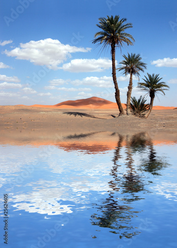 canvas print picture Palm Trees near the Lake in the Sahara Desert