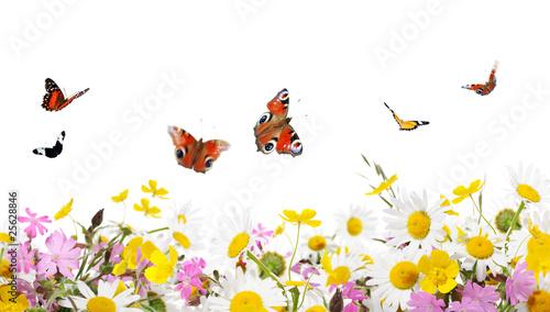 Deurstickers Vlinder flowers and butterflies