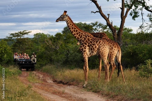 Foto op Aluminium Zuid Afrika Giraffe