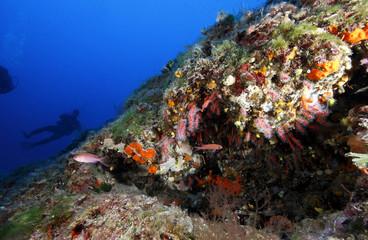 corallo rosso acquario