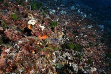 murena acquario