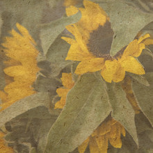 vintage wallpaper background with sunflower