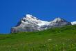 Blumenwiese Alpen Grindelwald 2