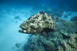 Fototapete Dorsch - Korallen - Fische