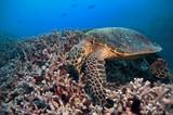 Fototapete Schranke - Blau - Reptilien / Amphibien