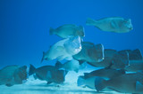 Fototapete Blau - Klar - Fische