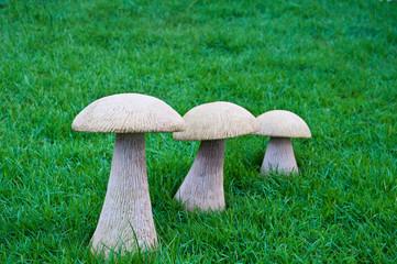mushroom on grass