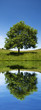 green tree reflection