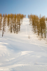 Ski tracks in the powder snow
