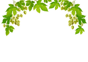 Fresh hop frame, isolated on white background