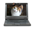small laptop with cat