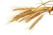 Leinwandbild Motiv wheat isolated on white