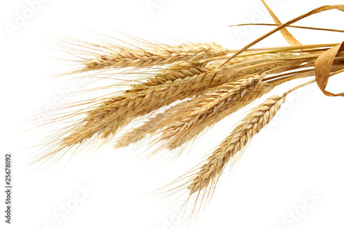 wheat isolated on white - 25678092
